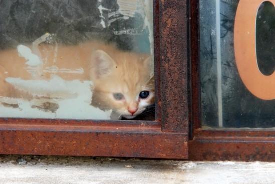 kitten1-6-4-08