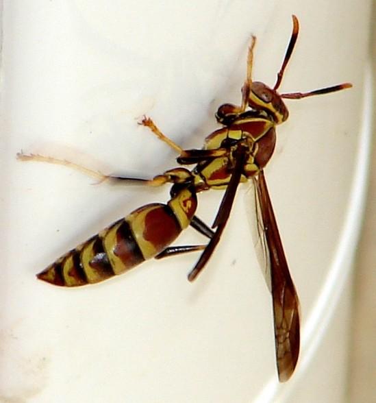 WASP1 5-21-06