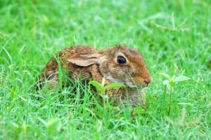 san jacinto bunny