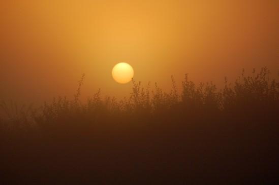 FOGGY SUNRISE 10-01-06