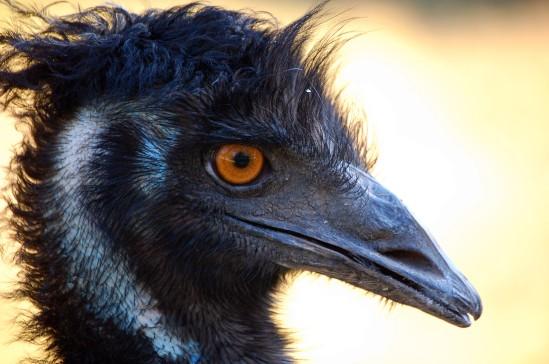 EMU3 DZ 11-16-06